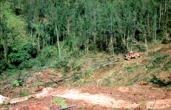 phd thesis in forestry Carbon forestry projects claim to be 'win-win' solutions to climate change, contributing to climate mitigation through carbon sequestration and to community development through carbon payments this thesis seeks to evaluate this proposition but in.